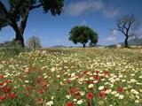 Spring Flowers  Majorca  Balearic Islands  Spain  Europe