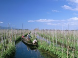 Tomato Floating Fields  Inle Lake  Shan State  Myanmar (Burma)  Asia