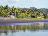 Vultures on the Beach at Playa Sihuapilapa  Pacific Coast  El Salvador  Central America