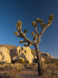 Joshua Tree National Park  California  USA