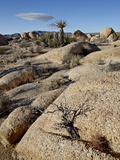 Typical Landscape  Joshua Tree National Park  California  United States of America  North America