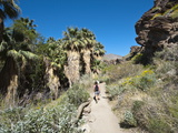 Hiking in Andreas Canyon  Indian Canyons  Palm Springs  California  USA