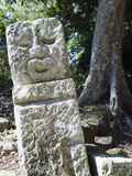 Sculpted Head Stone at Mayan Archeological Site  Copan Ruins  UNESCO World Heritage Site  Honduras