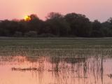 Sunset  Okavango Delta  Botswana  Africa