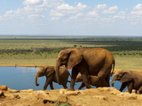 Elephants (Loxodonta Africana) at Water Hole  Tsavo East National Park  Kenya  East Africa  Africa