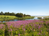 Field Near Lakeville  Prince Edward Island  Canada  North America
