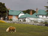 Horse and Goverment House in Port Stanley  Falkland Islands (Islas Malvinas)  South America