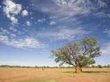 Lonely Tree Surrounded By a Termite Hill  Namibia  Africa
