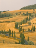 Cypress Trees Along Rural Road Near Pienza  Val D'Orica  Siena Province  Tuscany  Italy  Europe