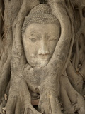 Wat Maha That  Ayutthaya  Ayutthaya Province  Thailand  Southeast Asia  Asia