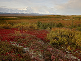 Mount Mckinley With Tundra in Fall Color  Denali National Park and Preserve  Alaska  USA