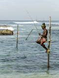 Traditional Stilt Fisherman  Koggala  Near Weligama  South Coast of Sri Lanka  Asia