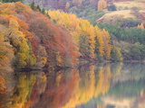 Autumn Colour on the Banks of the River Tummel Near Pitlochry  Scotland  United Kingdom  Europe
