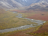 Braided River in the Fall  Denali National Park and Preserve  Alaska  USA