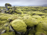 Lava Field Covered in Green Moss  South Iceland  Iceland  Polar Regions