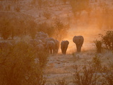 Elephants  Hwange National Park  Zimbabwe  Africa