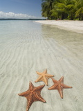 Starfish Beach  Bocas Del Drago  Isla Colon  Bocas Del Toro  Panama  Central America