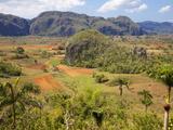 Agriculture in the Dramatic Valle De Vinales  Pinar Del Rio Province  Cuba