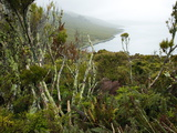 Flora on Campbell Island  Sub-Antarctic  Polar Regions