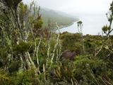 Flora on Campbell Island  Sub-Antarctic  Polar Regions