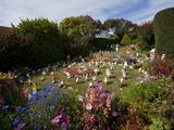 Garden Gnomes  Port Stanley  Falkland Islands  South America