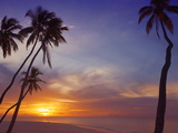Palm Trees and Ocean at Sunset  Maldives  Indian Ocean  Asia&No10;