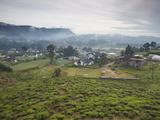 Tea Plantation  Nuwara Eliya  Sri Lanka  Asia