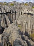 Coral Formations  Tsingy De Bemaraha  UNESCO World Heritage Site  Madagascar  Africa
