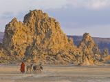 Local Afar Woman With Her Donkeys on Her Way Home  Lac Abbe  Republic of Djibouti  Africa