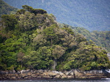 Fjord and Forest  Thomson Sound  South Island  New Zealand  Pacific