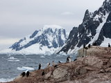 Shags and Penguins on Petersmann Island  Antarctica  Polar Regions