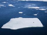 Adelie Penguin (Pygoscelis Adeliae) on Ice Floe  Dumont D'Urville  Antarctica  Polar Regions