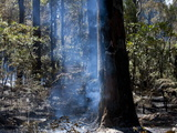 Forest Fire in Country Outside Perth  West Australia  Australia  Pacific