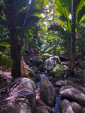 Beautiful Rocks in the Jungle of Valle De Mai  Praslin  Seychelles  Africa