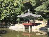 Secret Garden  Changdeokgung Palace (Palace of Illustrious Virtue)  Seoul  South Korea