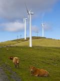 Wind Farm and Cows  Ortiguera Area  a Coruna  Galicia  Spain  Europe