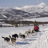 Dog Sledding With Huskies  Tromso Wilderness Centre  Norway  Scandinavia  Europe