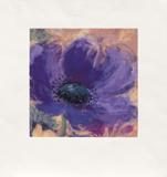 Minuetta/Blue Poppy  c2000
