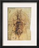 Leonardo: Anatomy  C1510