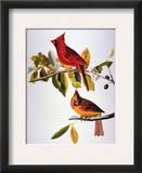 Audubon: Cardinal