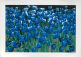 Blaue Tulpen  c2002