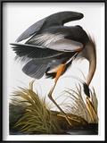 Audubon: Heron