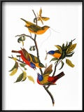 Audubon: Bunting  1827