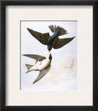 Audubon: Swallows  1827-38