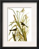 Audubon: Sparrow  1827