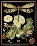 Curieuse libellule sur fond noir II Reproduction giclée encadrée par Vision Studio