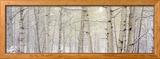 Peupliers enneigés, colorado, USA Photo encadrée par Panoramic Images