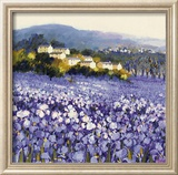 Champs D'Iris  Provence