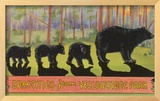Greetings from Yellowstone National Park  Bears