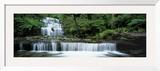 Liffey Falls  Tasmania  Australia